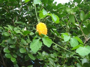 One of the herbs in the detox